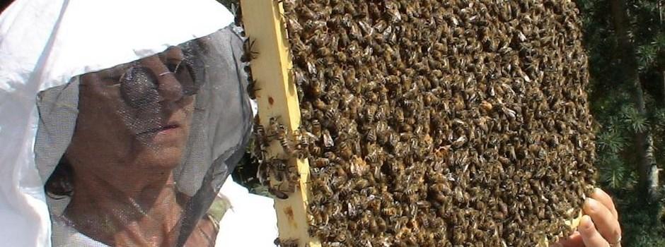 apiculteur 24200