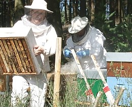 Formation en apiculture pour devenir plus performant