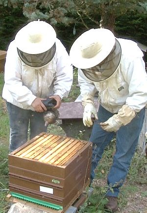 Formation apiculture individuelle