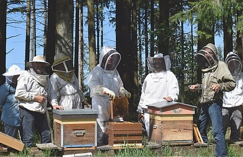apiculteur de loisir